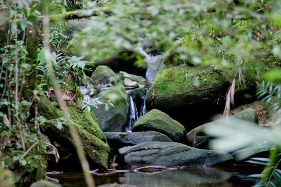 pretty mountain stream