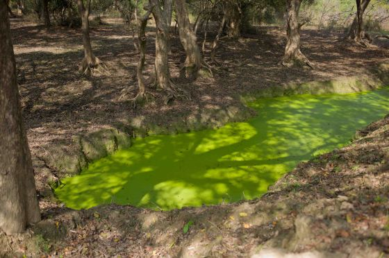 beautiful green pond in the arid scape