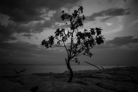 a lone tree at the breakwater