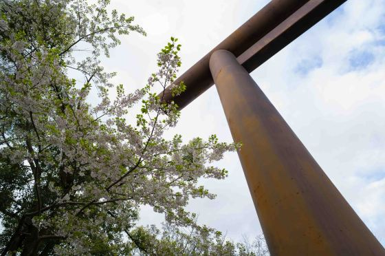 cherry blossoms around the arch
