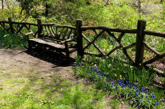garden bench amongst the bluebells