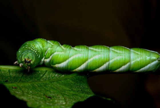 even the caterpillars were enormous!