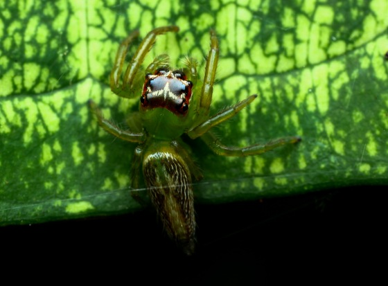 and a less colourful spider