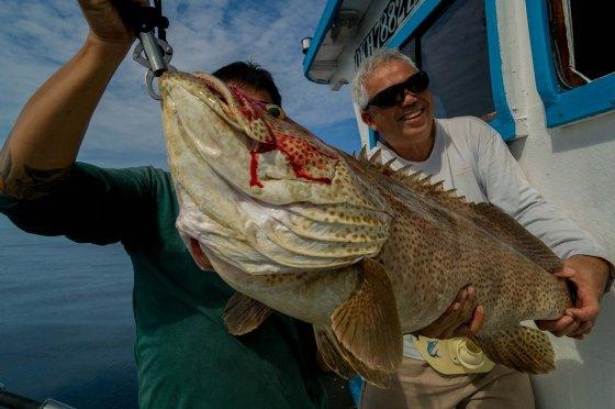 14 kg Grouper