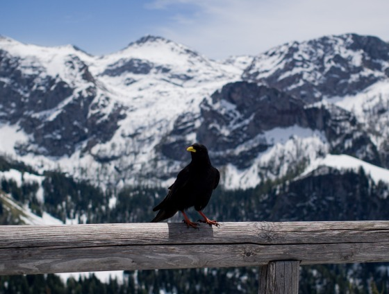 even the black birds enjoyed the view