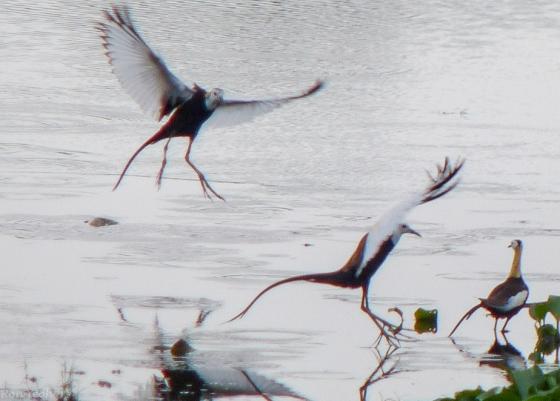 gracious landing