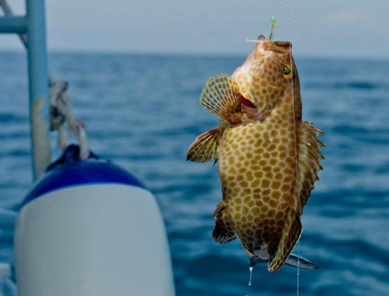 and a small grouper