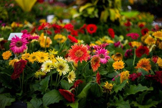 Flowers everywhere...
