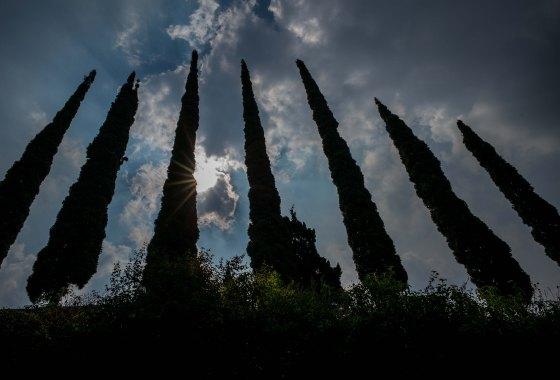 beautiful tree formation
