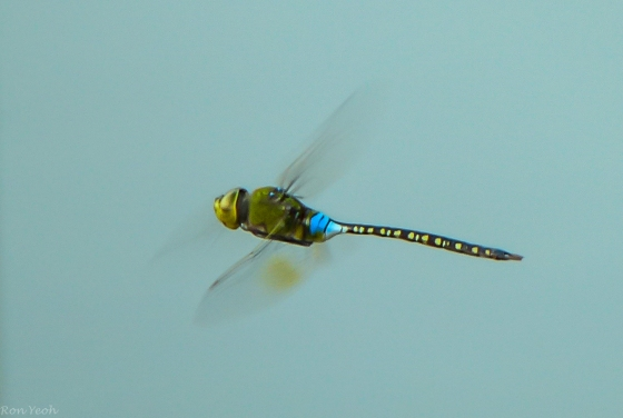 dragonflies were hovering