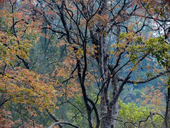 autumn like colours on Panderman