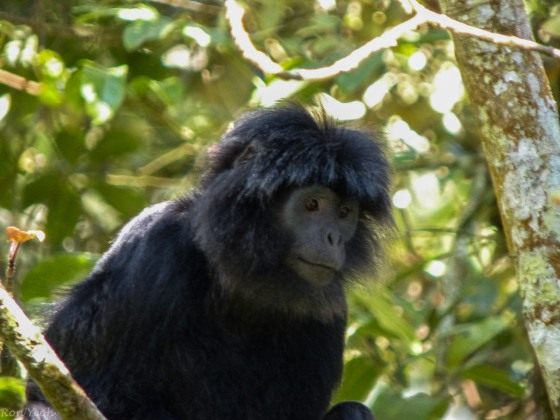 Kindly looking mama monkey