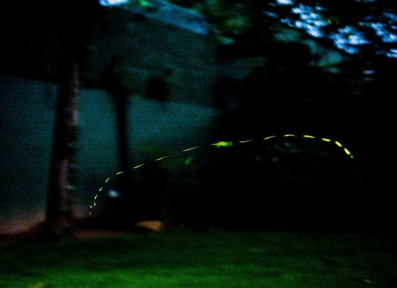 fireflies in pitch darkness