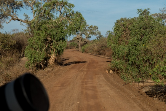 The dirt roads in Yala