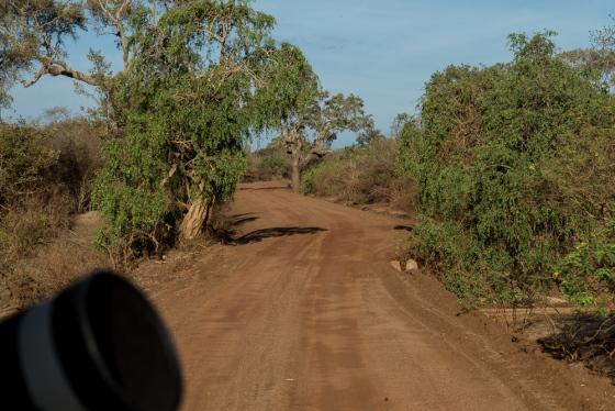 The dirt roads in Yala