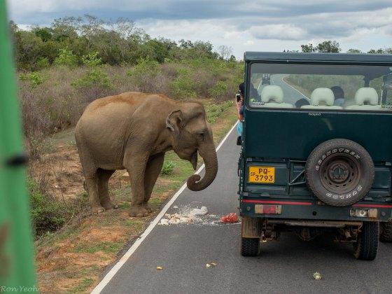 tour guides feeding the elephant..tsk tsk