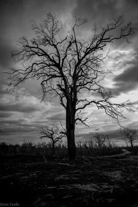 even dead trees are impressive