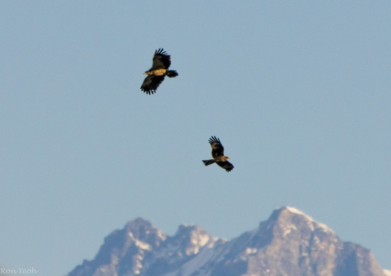 it was just beautiful watching the eagles soarover the Himalaya