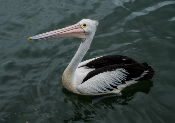 The pelicans at fish port were friendly...