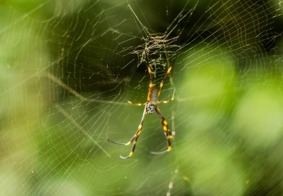 a wee spider