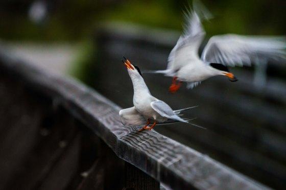 squabbling on the bridge