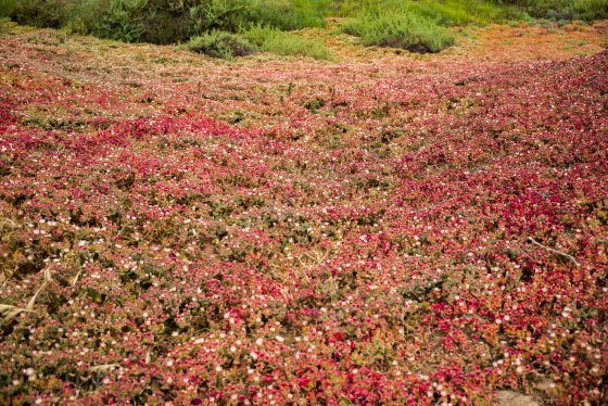 the red colours of the vegetation were fascinating