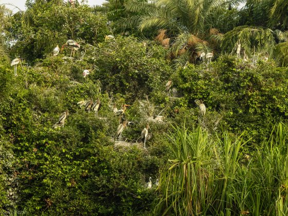 Greenery dotted with birds...