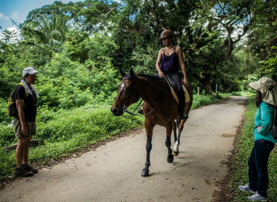 Bukit Brown Cemetery is a tranquil place, where dogs are walked and horses are ridden...