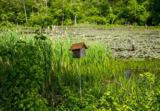 Bird box on the bank