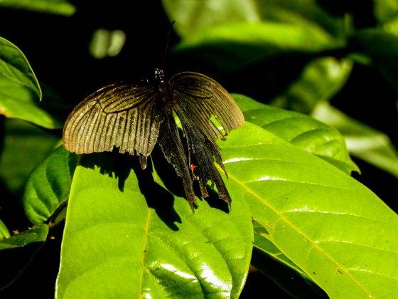 a slightly tatty moth