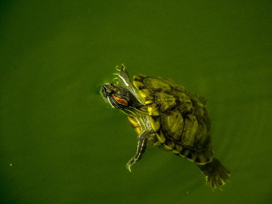there were lots of red eared sliders around