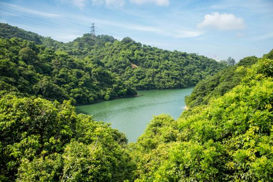 Coming down from the Eagle's Nest trail, we crossede the road and headed to the Golden Hill Nature Park...a lovely little walk through the Kowloon Reservoir area....
