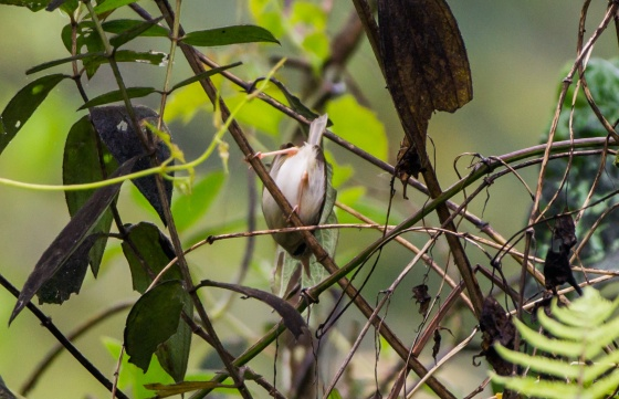 tailorbird at somkehouse