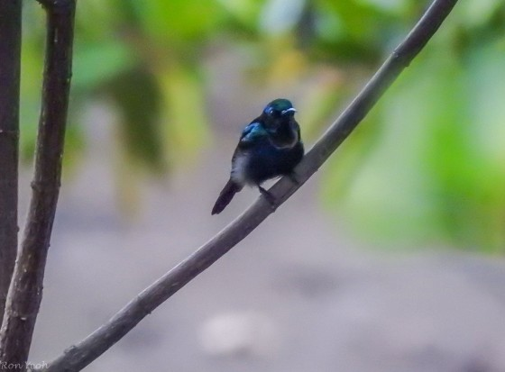 The male copper throated sunbird was easily found next to the guardhouse entering the penal colony