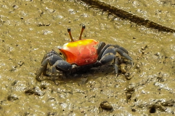 there were also some interesting crabs...