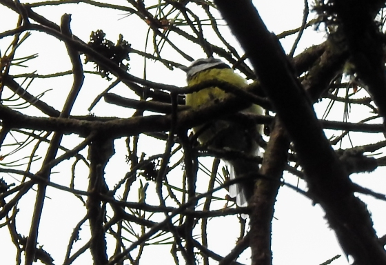 A shy blue tit was darting about the trees..