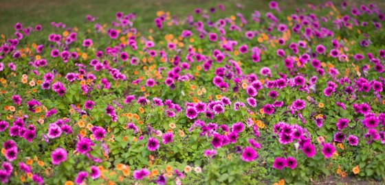 on entering the garden, you immediately see this charming patch of summer flowers...