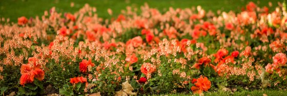 and another spectacularly orange flower bed comes into view