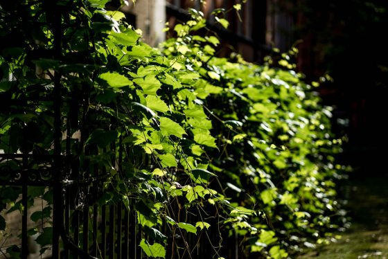 the bright morning sun made even the most ordinary green leaves glow