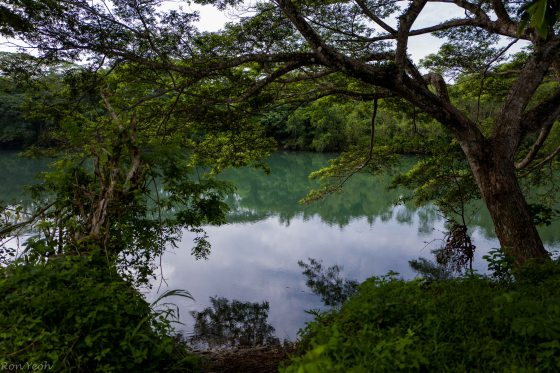 At this scenic spot by the river, we settled down trying to look for the blue eared kingfisher,,,