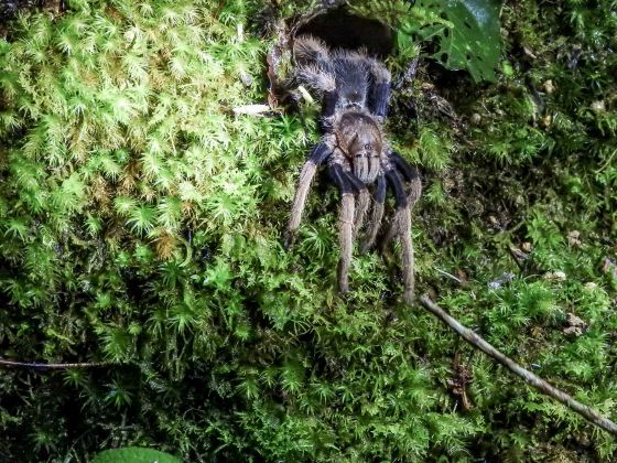 And the tarantula duly emerged