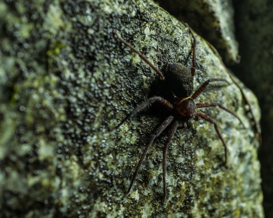 After the tarantulae, this Huntsman spider seemed almost mundane....