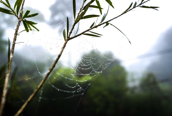 Dawn dew even on a spider's web