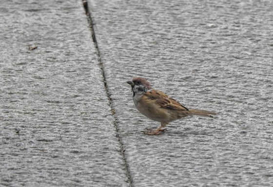 the only bird I saw this first outing was this sparrow!