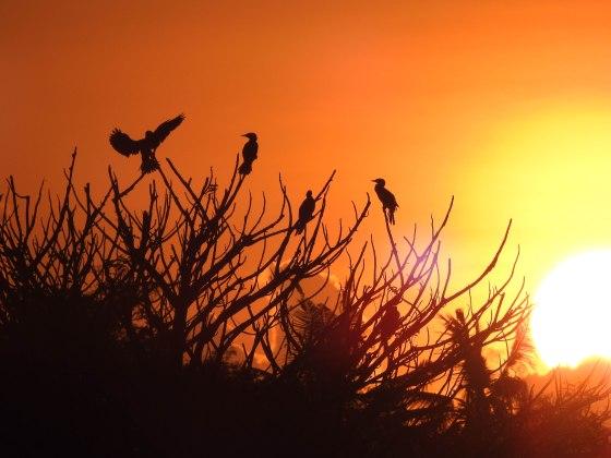 The cormorants were stirring...