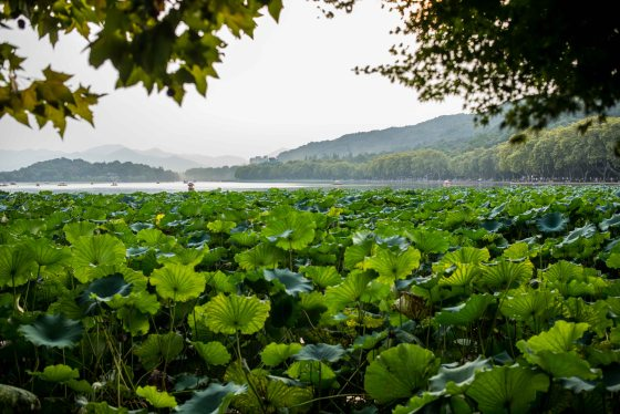The flora around the lake lotuses etc