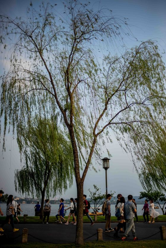 An evening walk along the 'Broken Bridge' or duan chiao...willows gently wafting in the wind.