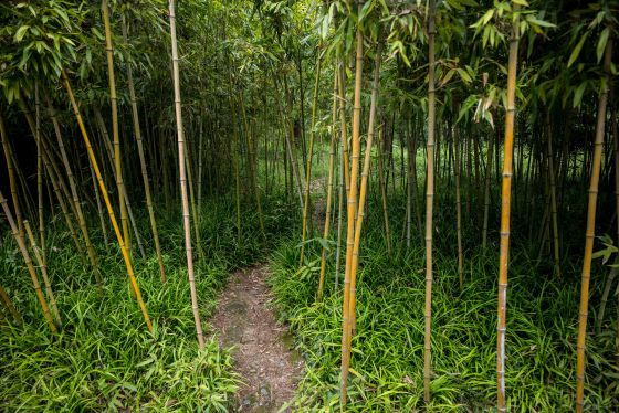 a walk through the bamboo copse...as if it was in Crouching Tiger Hidden Dragon!