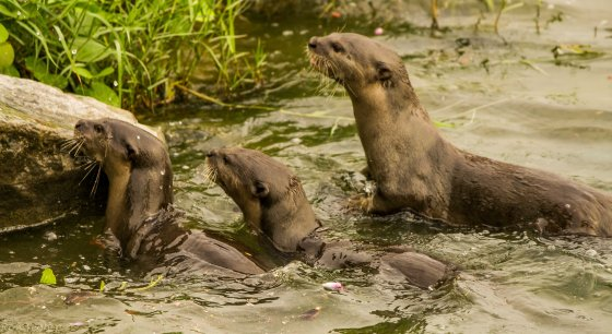 then a family of six otters appeared in the water and ran up into the gardens...