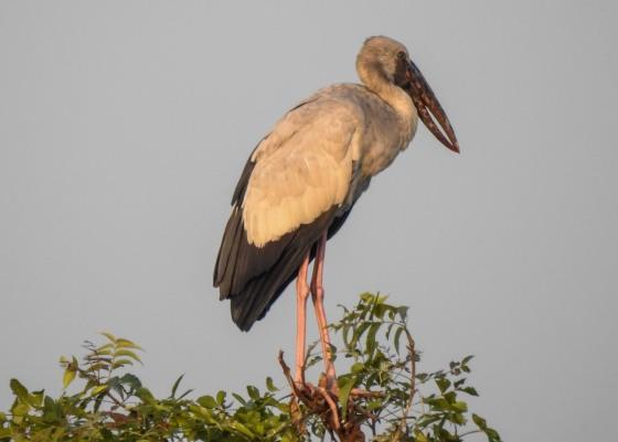 oprn bill stork